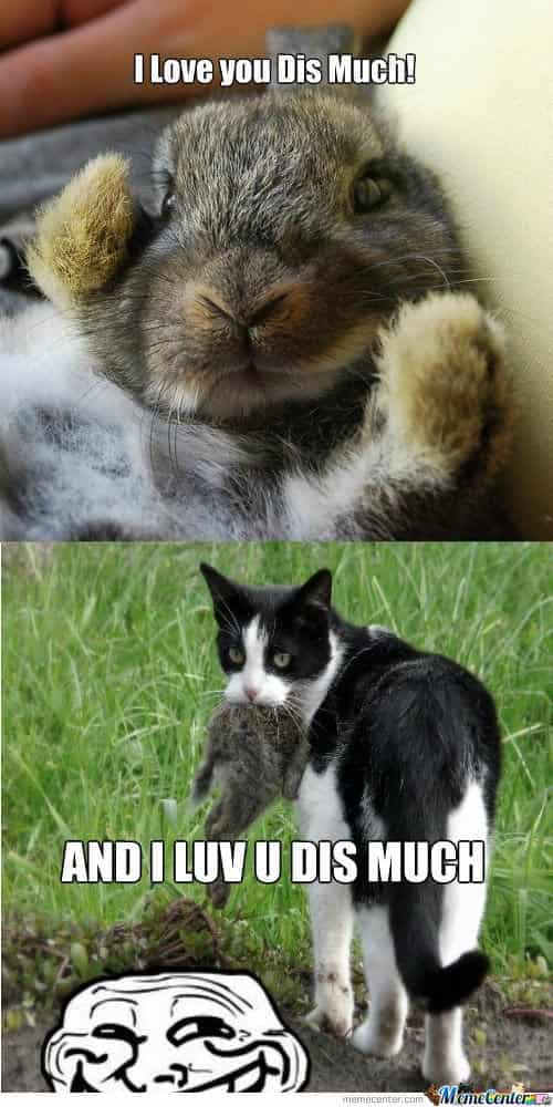 I love you dis much and i luv u dis much funny bunny meme image