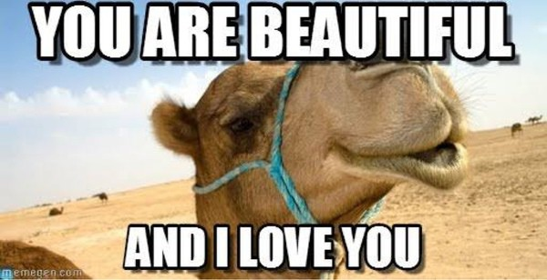 You are beautiful and i love you funny camel meme image