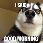 Dog said good morning cute meme